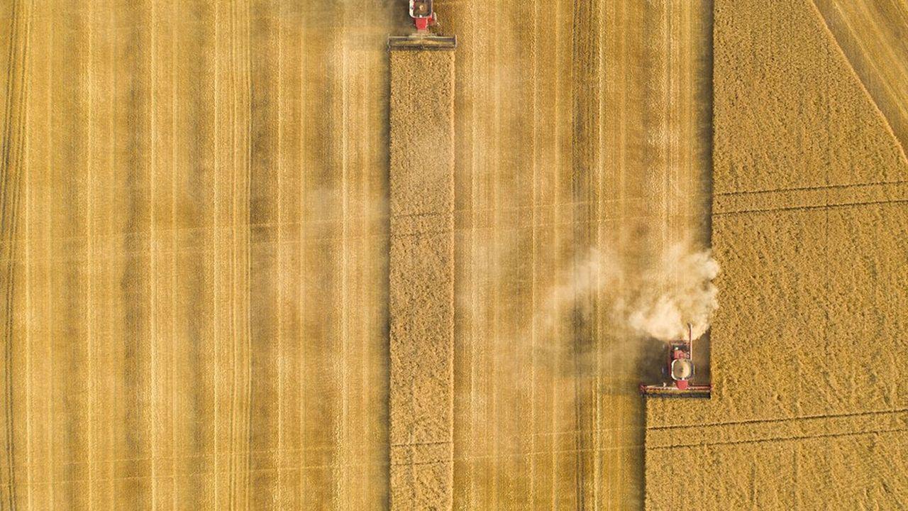 En raison de sécheresses en Amérique du Nord et de pluies abondantes en Europe, les perspectives de récoltes de blé sont moins bonnes que prévu.