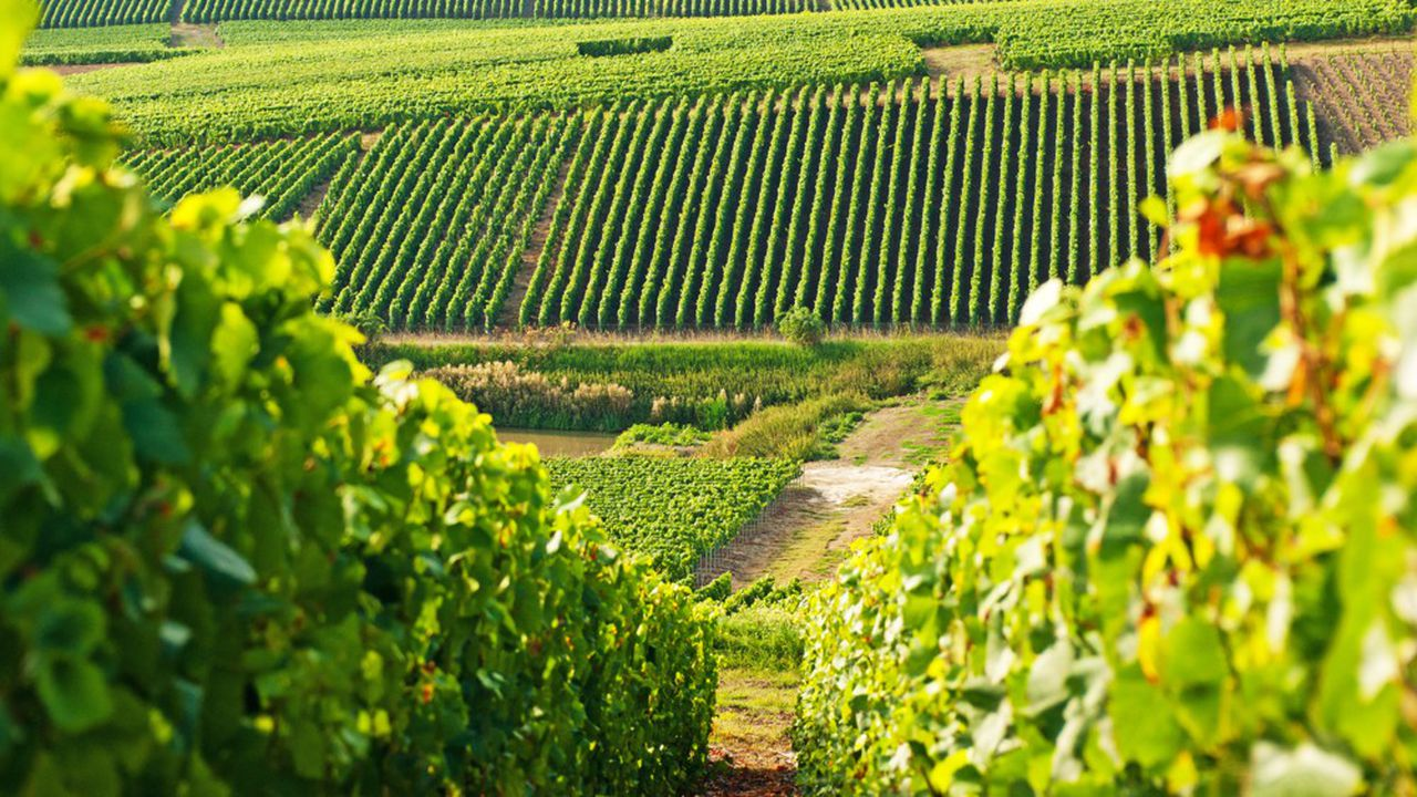 Haviland OEnologie rejoint le pôle matériel vinicole de Viséa-Couturier.