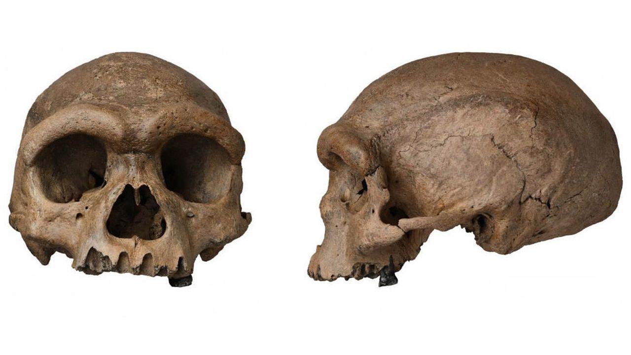 Le crâne de Harbin avait été mis à jour dans les années 1930, durant l'occupation japonaise du nord de la Chine, puis caché et oublié… Jusqu'à resurgir il y a peu et enflammer la communauté des paléontologues.