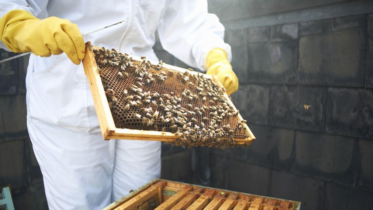La commune met gracieusement le terrain à disposition et recevra une partie de la récolte annuelle de miel.