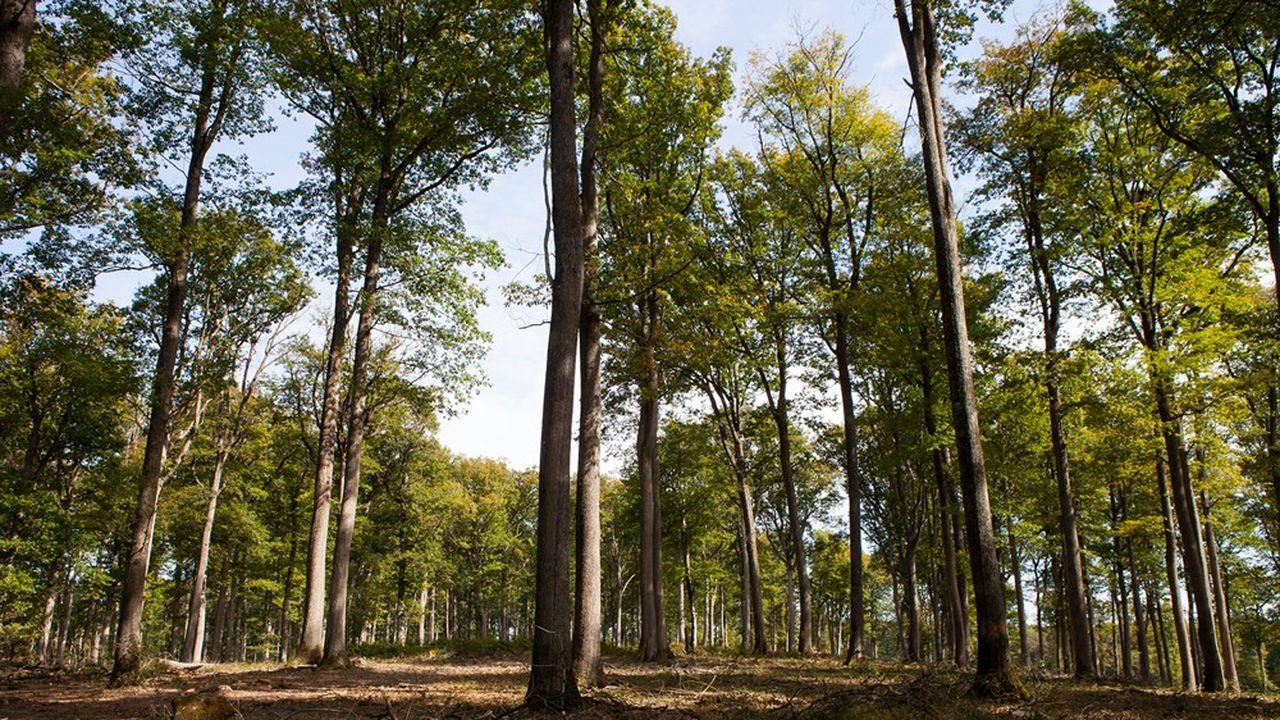 La forêt nationale de Tronçais, dans l'Allier, est l'un des plus beaux massifs forestiers de France. Environ 1.100 de ses 10.000 hectares sont classées Natura 2000, un «label» européen qui protège la biodiversité des lieux.