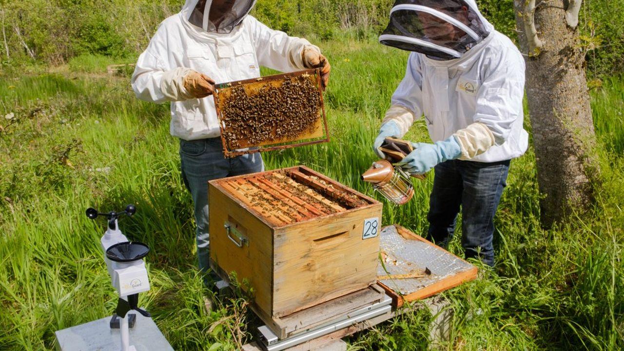 La ruche connectée montée avec la start-up BeeGuard à l'université Toulouse-III.