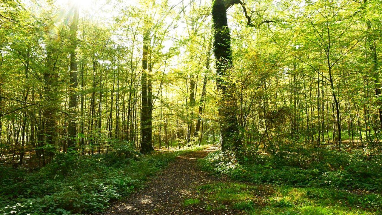 La déviation de la route départementale traverserait l'espace forestier de la commune.