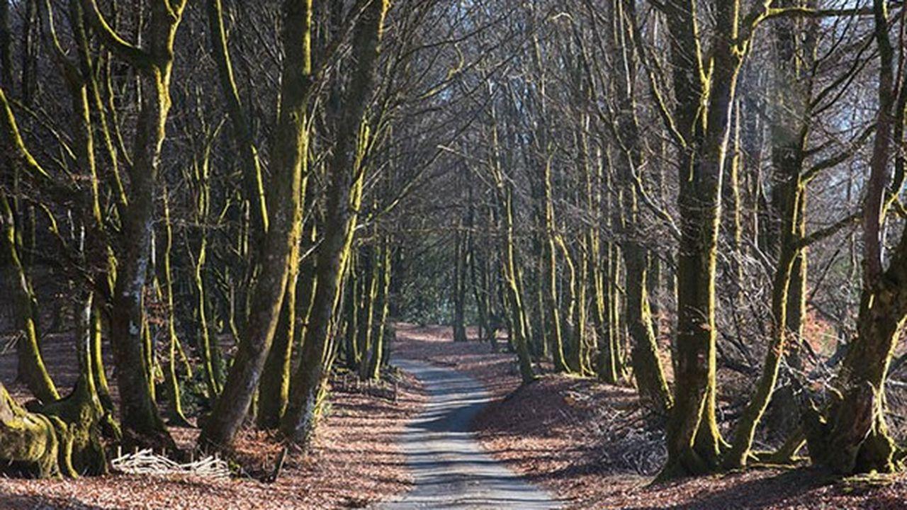 Près de 1.000 citoyens réunis en groupements forestiers disposent de 470 hectares sous gestion dans le Morvan.