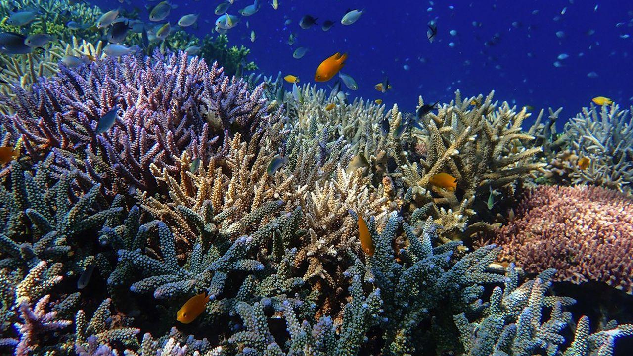 En ce début octobre 2021, des entreprises ont participé à un challenge connecté et écoresponsable en faveur de la plantation de coraux sur des récifs, en Indonésie.