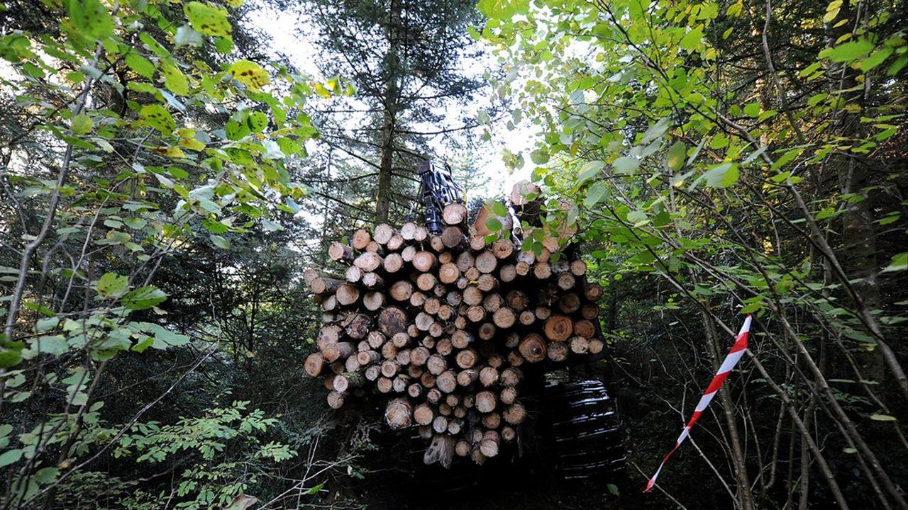 Ramassage de troncs après une coupe dans un bois français géré par l'Office national des forêts.