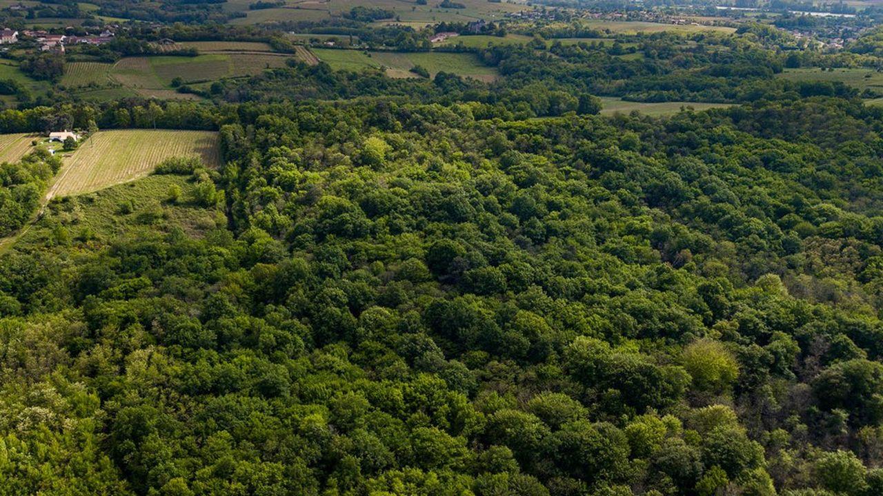 Les projets d'espaces verts, comme la forêt de Pierrelaye-Bessancourt, figurent au nombre des axes du PCAET de Val Parisis Agglo.