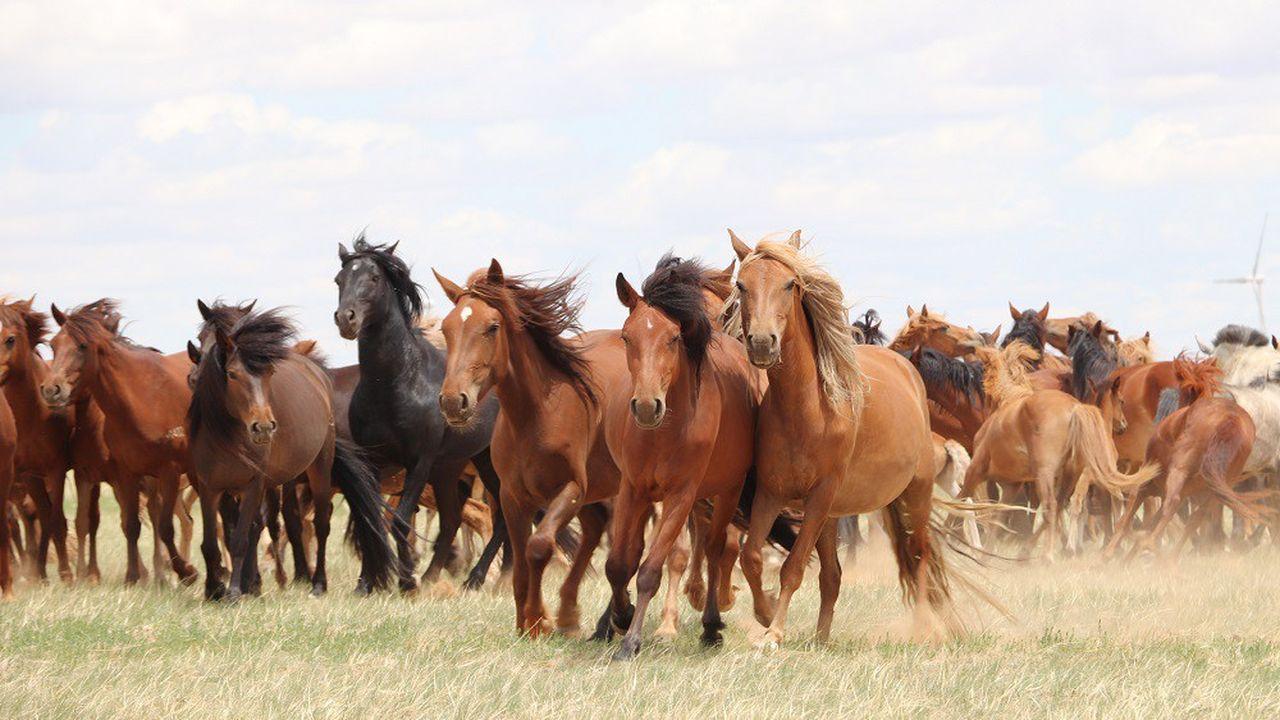 Le secret de la domestication du cheval enfin percé
